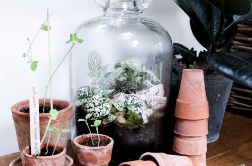 Terrarium from London Terrariums