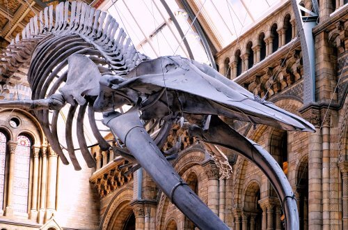 Natural-history-museum-hintze-hall-blue-whale